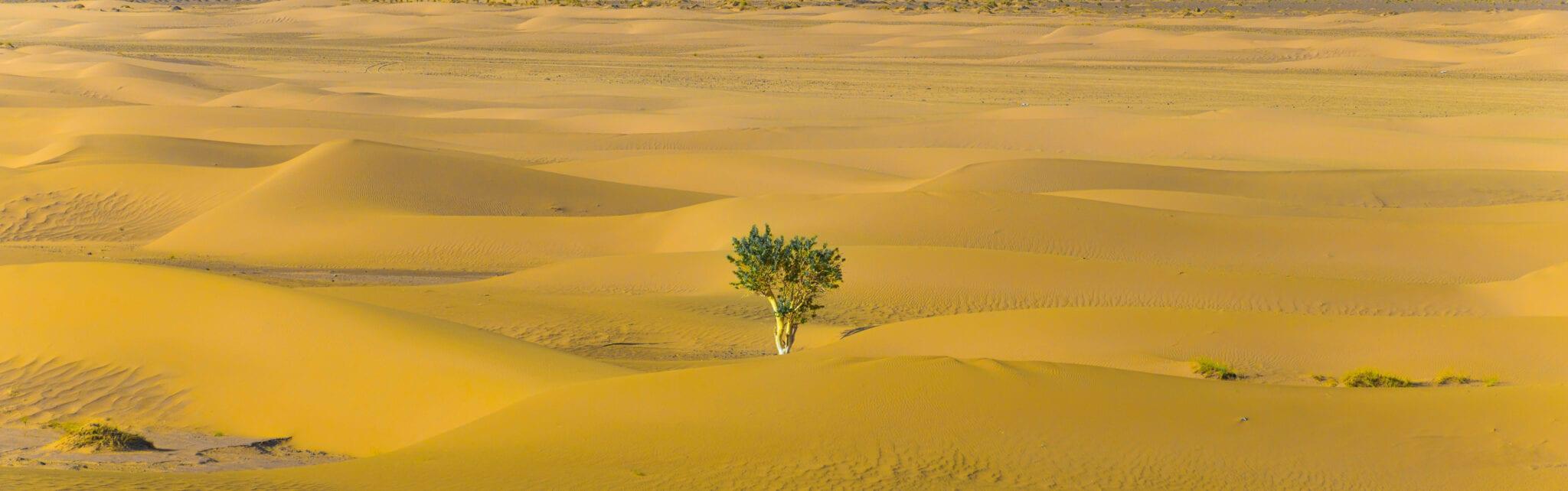 träd i öken